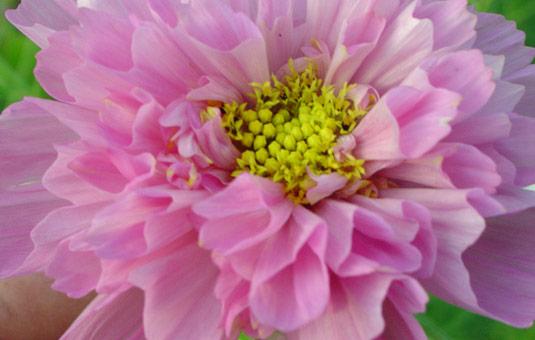 Live Flower Garden : Renee arcand minnesota live flowers ‐ garden wedding
